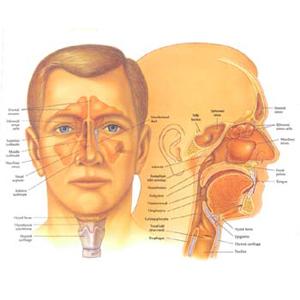 Ear, Nose & Eyelid Surgery