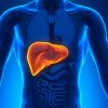 Liver Treatments