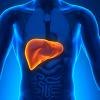 Liver Treatments
