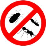 Termite & Pest control Services