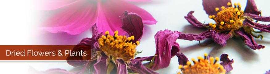 Dried Flowers & Plants